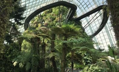 Superieure bomen, nachtleven in zoo en beste luchthaven ter wereld: tips voor reis naar Singapore