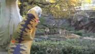 Nederlandse YouTubers zetten zich voor aap in Antwerpse Zoo