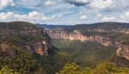 Bosbranden Australië: prehistorische bomen in het geheim gered
