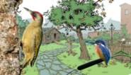 Hang een oude jas op en wees niet bang voor wat minder licht: zo maak je je tuin vogelvriendelijk