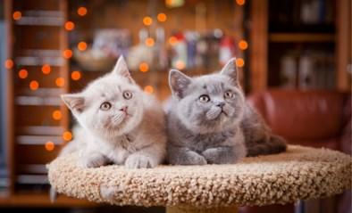 """""""Kat is geen koelkast, toch zijn regels hetzelfde"""": België wil duidelijke garantieregels voor aankoop van dieren"""