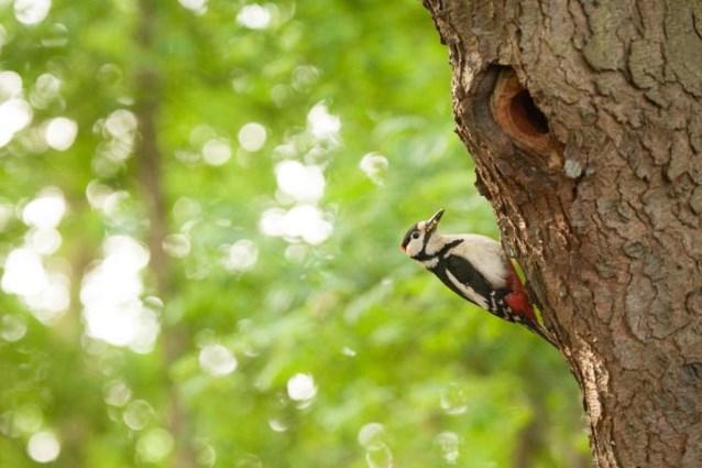 Middenloop van Velpe ook erkend als natuurreservaat