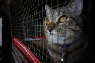 Levenslang verbod tot het houden van dieren na verwaarlozing van 35 katten