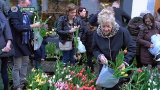 VIDEO. Tongerse bloemist deelt duizenden bloemen gratis uit