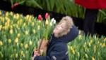 6.500 bezoekers voor gratis tulpenpluktuin in Antwerpen
