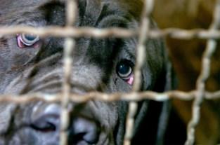Meer meldingen van dierenmishandeling
