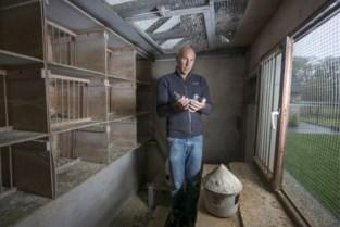 Duivenmelker eist ruim 700.000 euro schadevergoeding voor diefstal van topduiven