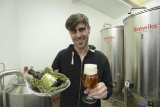 """Hoe lokaal cannabisbiertje stilaan Europa verovert: """"High kan je er nochtans niet van worden"""""""