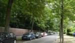Bekende kastanjebomen blijken nu toch gezond: stadsbestuur past haar plannen aan voor heraanleg van dreef