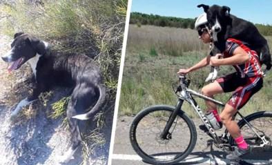 Hartverwarmend: fietser vindt uitgedroogde hond en neemt hem mee op zijn schouder
