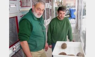 Dierenopvangcentrum had zes maanden om voortbestaan te verzekeren. Dankzij duizenden giften lukte dat