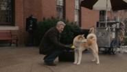 Hond bijt vrouw die hem vorige maand het leven redde