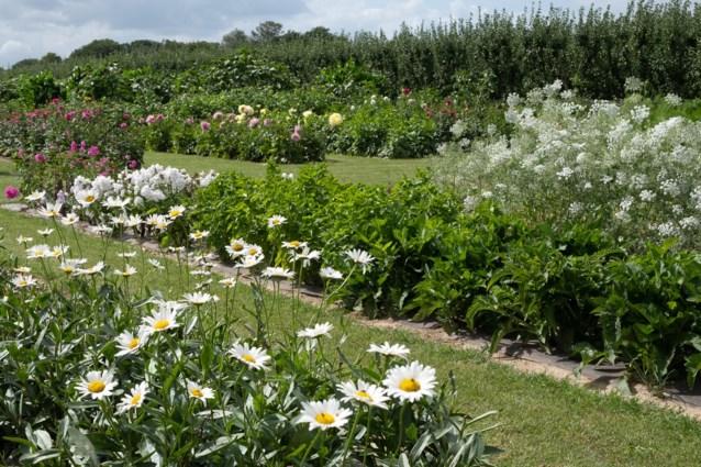 Bloemenplukveld Fleurderij maakt zich klaar voor een jaar vol bloemen