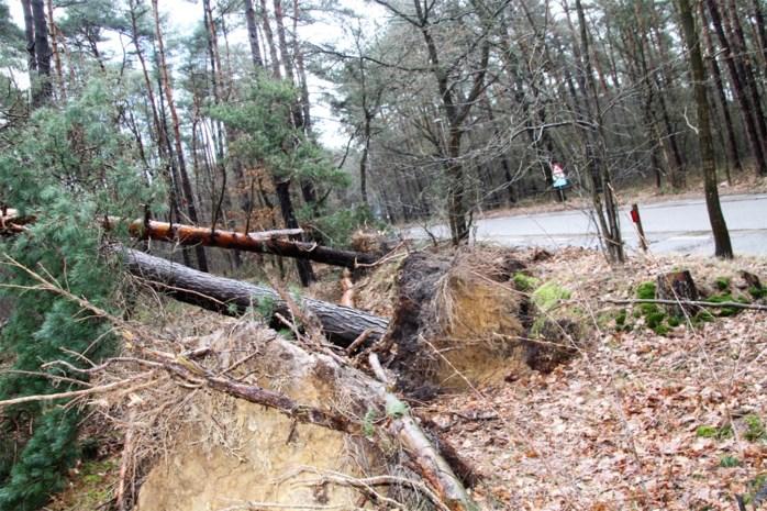 Voorjaarsstorm erkend als ramp