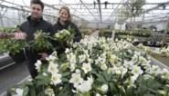 Tineke en Simon nemen twintigjarige plantenkwekerij Het Wilgenbroek over