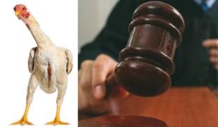 Weinig vlees aan en een schoonheidsprijs winnen ze nooit, maar toch kibbelen hobbykwekers in rechtbank over acht 'lelijke' kippen