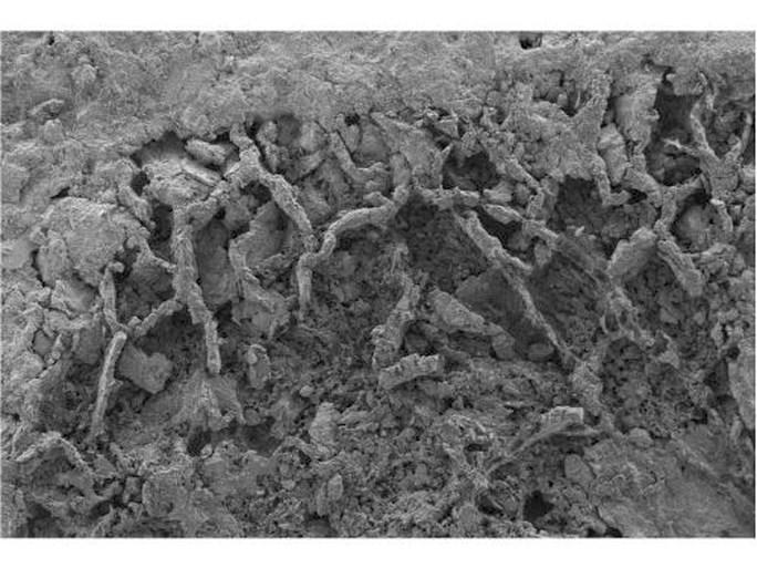Oudste paddenstoel ter wereld gevonden in rots AfricaMuseum