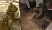 Campagne om ondervoede leeuwen te redden gaat viraal, dierenpark ontkent problemen