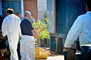 Bende kweekt 553 cannabisplanten in loods: eigenaar riskeert twee jaar cel