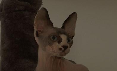 VIDEO. Jennifer is haar bijzondere kat al maanden kwijt. Tot ze plots online opduikt