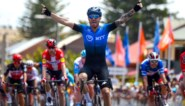 Tour Down Under: Giacomo Nizzolo profiteert van Riis-effect en misverstand bij Lotto-Soudal