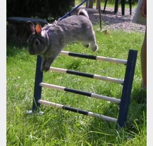 Kleinveeshow met konijnenjumping
