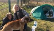 """Buurtbewoners springen in de bres voor vader en stiefdochter die met hun honden op straat zijn gezet: """"Dit is onmenselijk"""""""