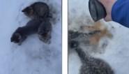 Man vindt kittens vastgevroren aan de grond en redt hen met warme koffie