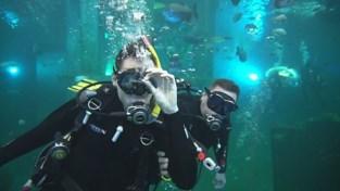 VIDEO. Onderwaterconcert voor mensen met beperking in duikcentrum TODI