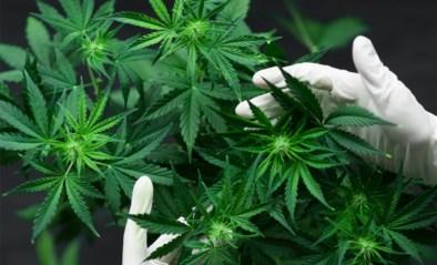 Wijkagent ontdekt bij toeval cannabisplantage in Hoeilaart