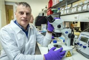 """Leuvens labo ontwikkelt in sneltempo vaccin tegen coronavirus: """"We zijn optimistisch dat het ons zal lukken"""""""