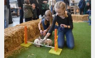 Pluizige springkampioenen stelen show op eerste konijnenjumping van België