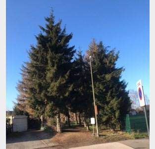 Leuven plant twee buurtbossen, samen goed voor meer dan 2.000 bomen