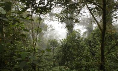 Vrouw en drie kinderen na meer dan een maand teruggevonden in Amazonewoud (dankzij inheemse stam die foto's op Facebook plaatste)