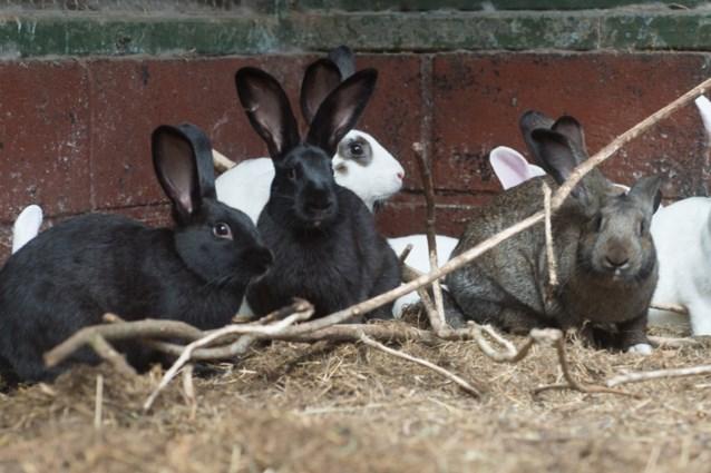 VLAM-campagne om konijn te eten krijgt tegenwind van dierenrechtenorganisaties