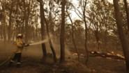 Australische hoofdstad zet zich schrap voor nieuwe vlaag van bosbranden