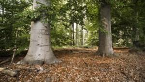 Vrijwilligers planten 18.000 nieuwe bomen