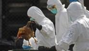 Alsof het nog niet erg genoeg was: nu ook uitbraak vogelgriep in China