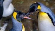 Roep van pinguïns lijkt op spraak van mensen