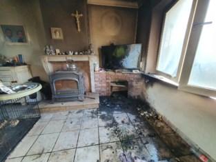 Katten komen om bij brand, maar puppy's werden gered