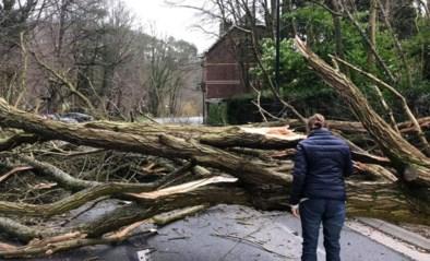 Storm Ciara houdt lelijk huis, sommige scholen blijven vandaag dicht