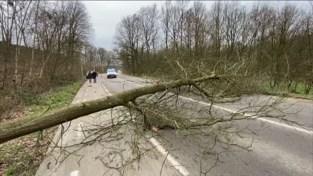 Veiligheidsmaatregelen naar aanleiding van storm Dennis