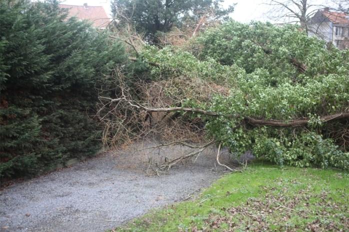 Ruim 200 oproepen voor schade door storm Ciara, parken blijven dicht