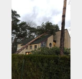 Storm zorgt ook in Tremelo voor omgewaaide bomen