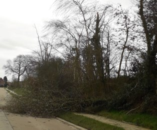 Omgevallen bomen door storm