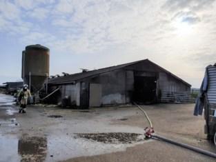 Twee kalveren dood na tractorbrand in stal