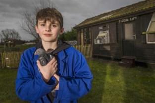 """'Ouwemannensport'? Arthur (11) is de hipste duivenmelker van ons land: """"Als ze niet op tijd landen, is het stress"""""""