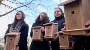 VIDEO. Leerlingen Sint-Ursula-instituut hangen 180 nestkastjes in het Rivierenhof