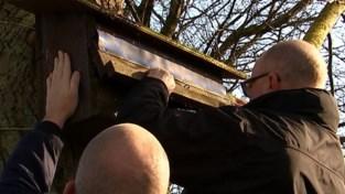 Natuurpunt controleert steenuilenkasten in Lubbeek: