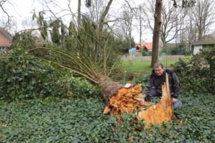 Ciara bezorgt Kempen kapotte serre, nieuw bruggetje en omgewaaide bomen